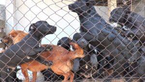Od odbačenih postaju psi spremni za novi dom