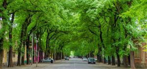 Ulica Generala Drapšina je među 50 najlepših ulice u svetu