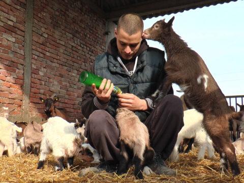 Ivan sa ocem i dedom čuva stado koza i komad svoje zemlje